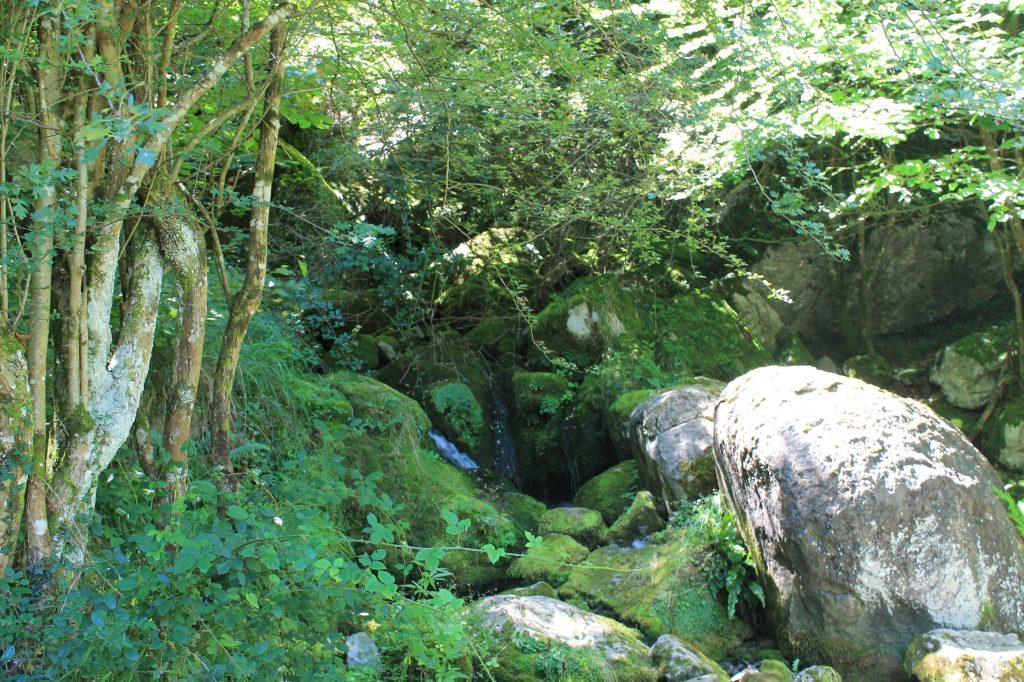 bosque de duendes en asón