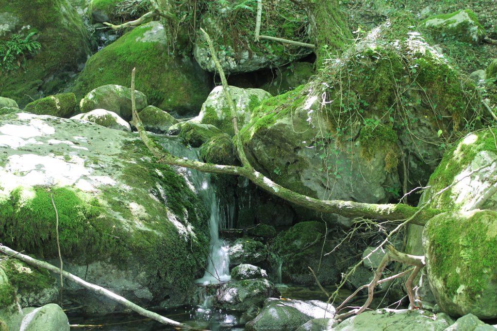 bosque de hadas en Asón